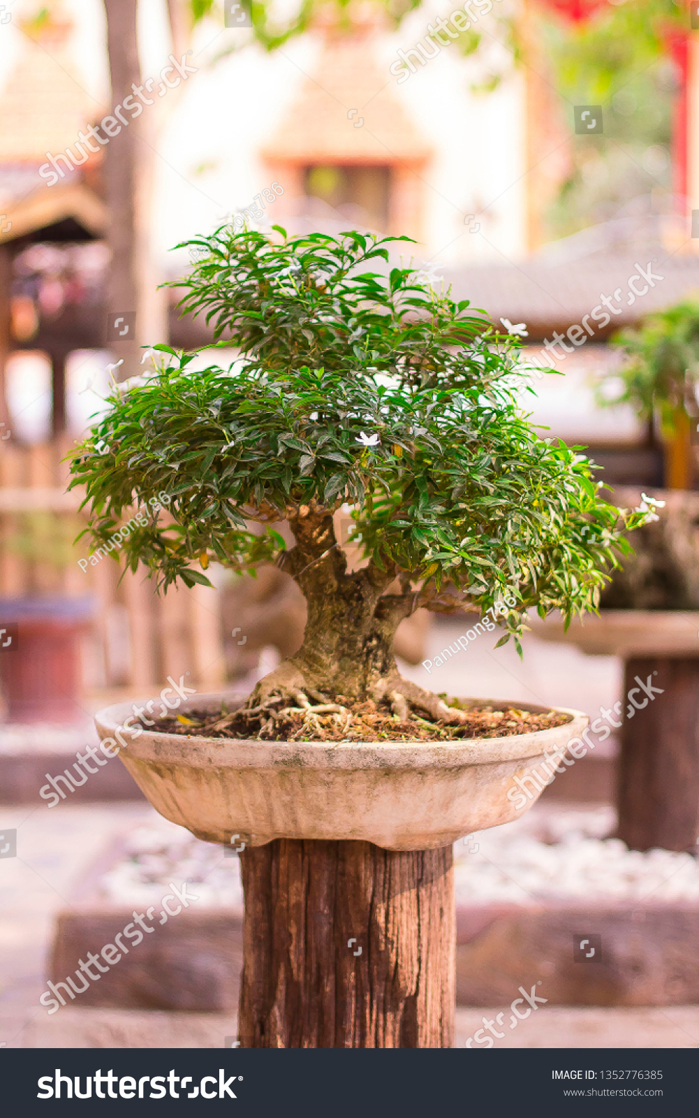 Collected Tree Bonsai Stock Photo Edit Now 1352776385
