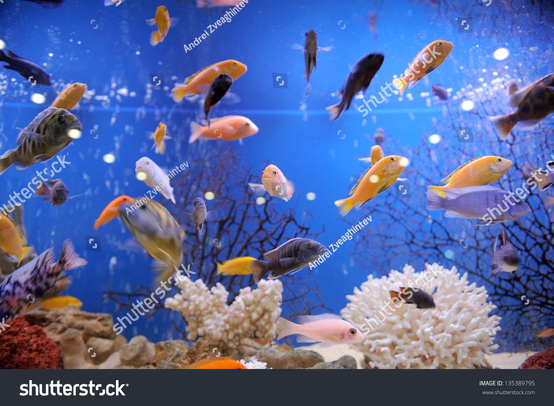 Fish in big aquarium - Colorful Fish In Big Aquarium