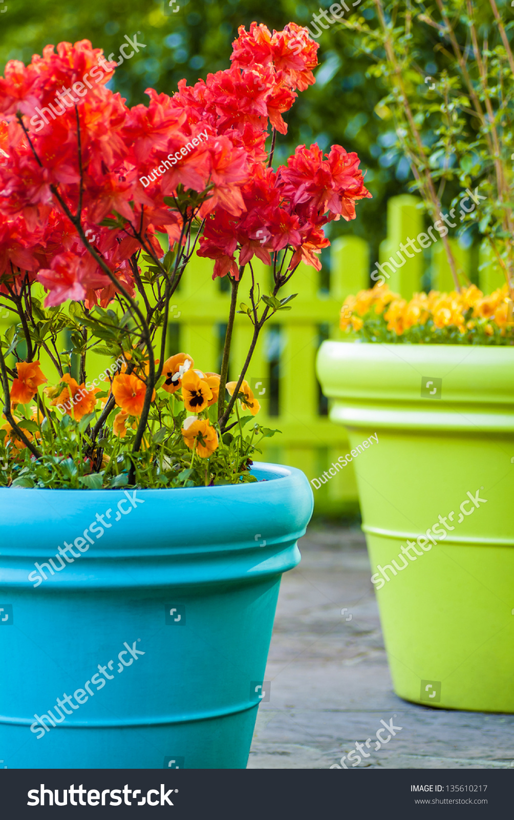 Colorful Blue Green Flower Pots Filled Stock Photo Edit Now
