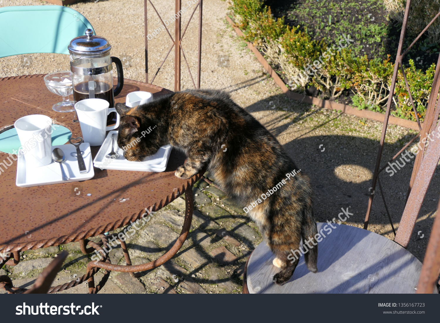 Tortoiseshell cat standing on chair licking cream from plate on outdoor table