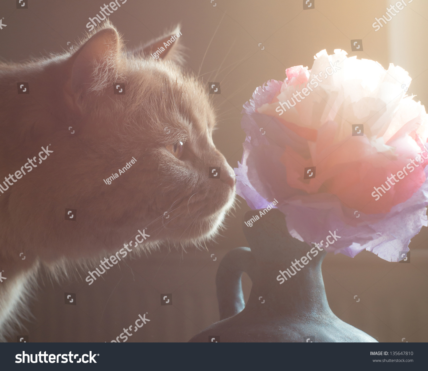 Cat Smelling Tissue Paper Flower Stock Photo Edit Now 135647810