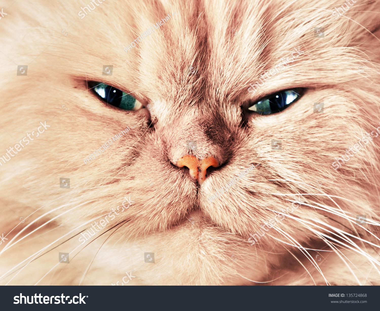 Cute Cat Face Close Portrait Looking Stock