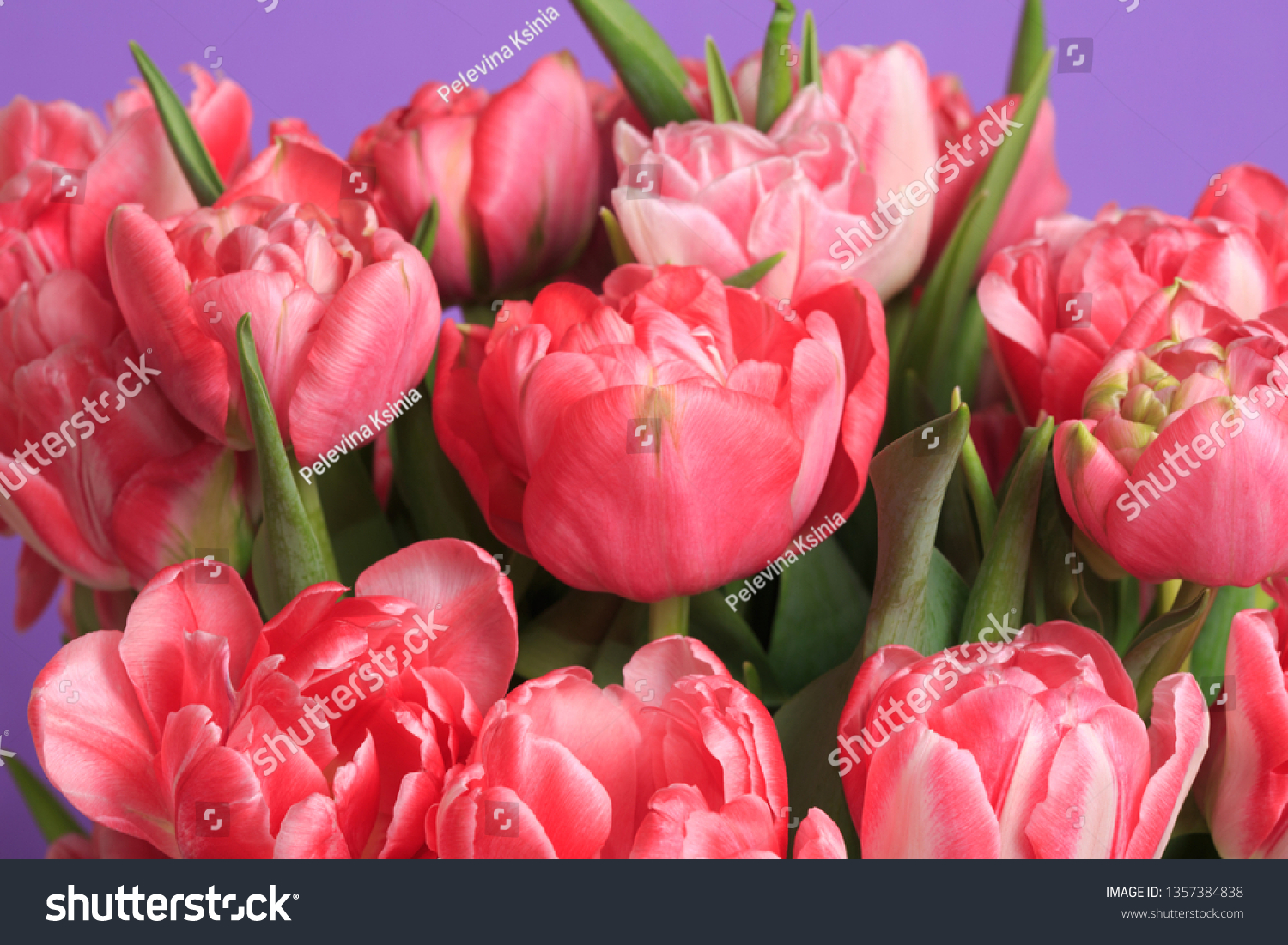Floral Wallpaper Fragment Bouquet Coral Tulips Stock Photo Edit