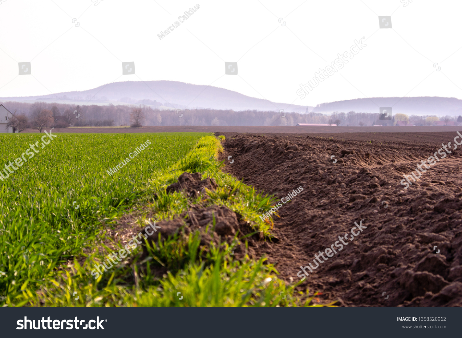 furrow between a freshly ploughed field and a field of young wheat #1358520962