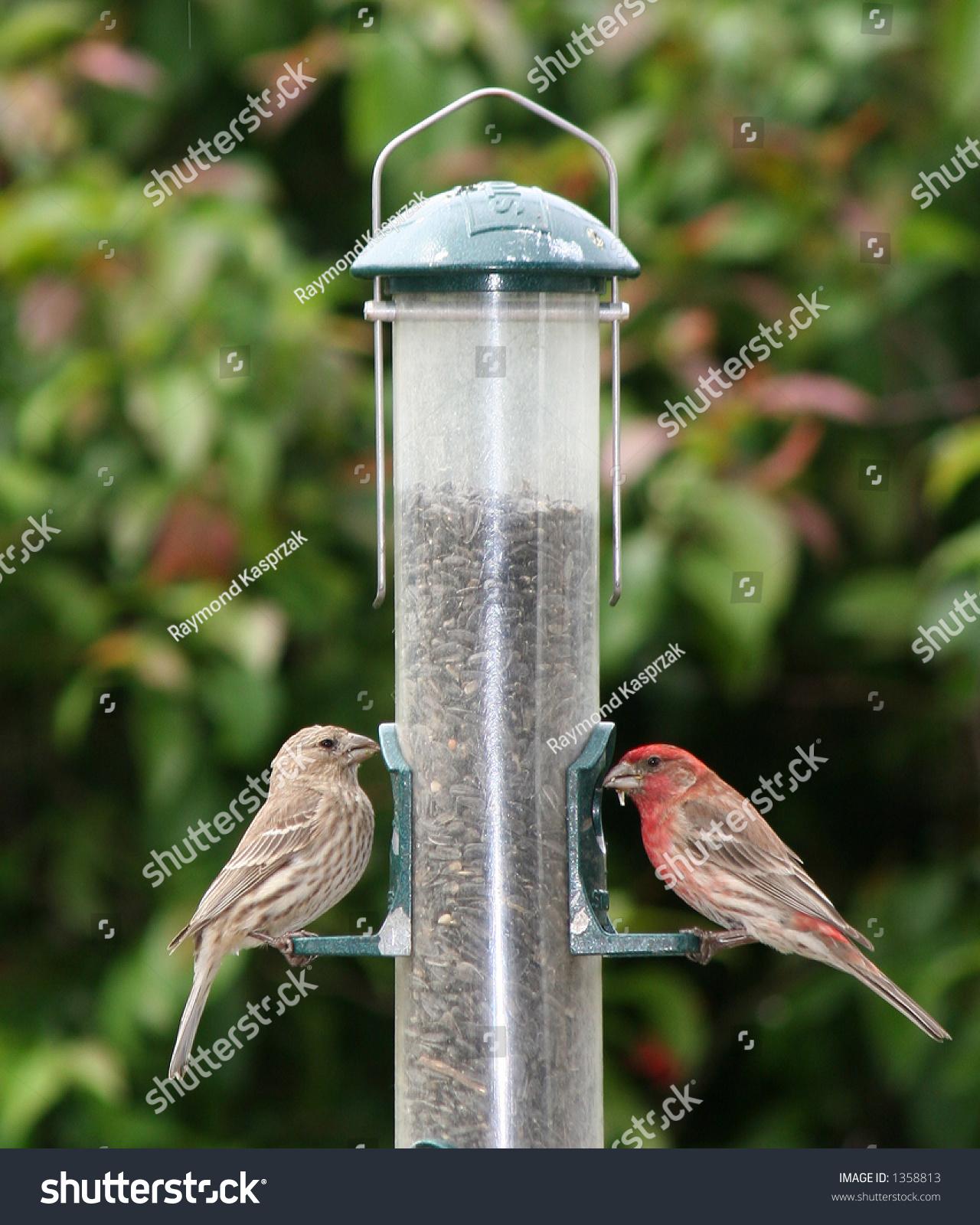 feeding finches backyard outdoor goods