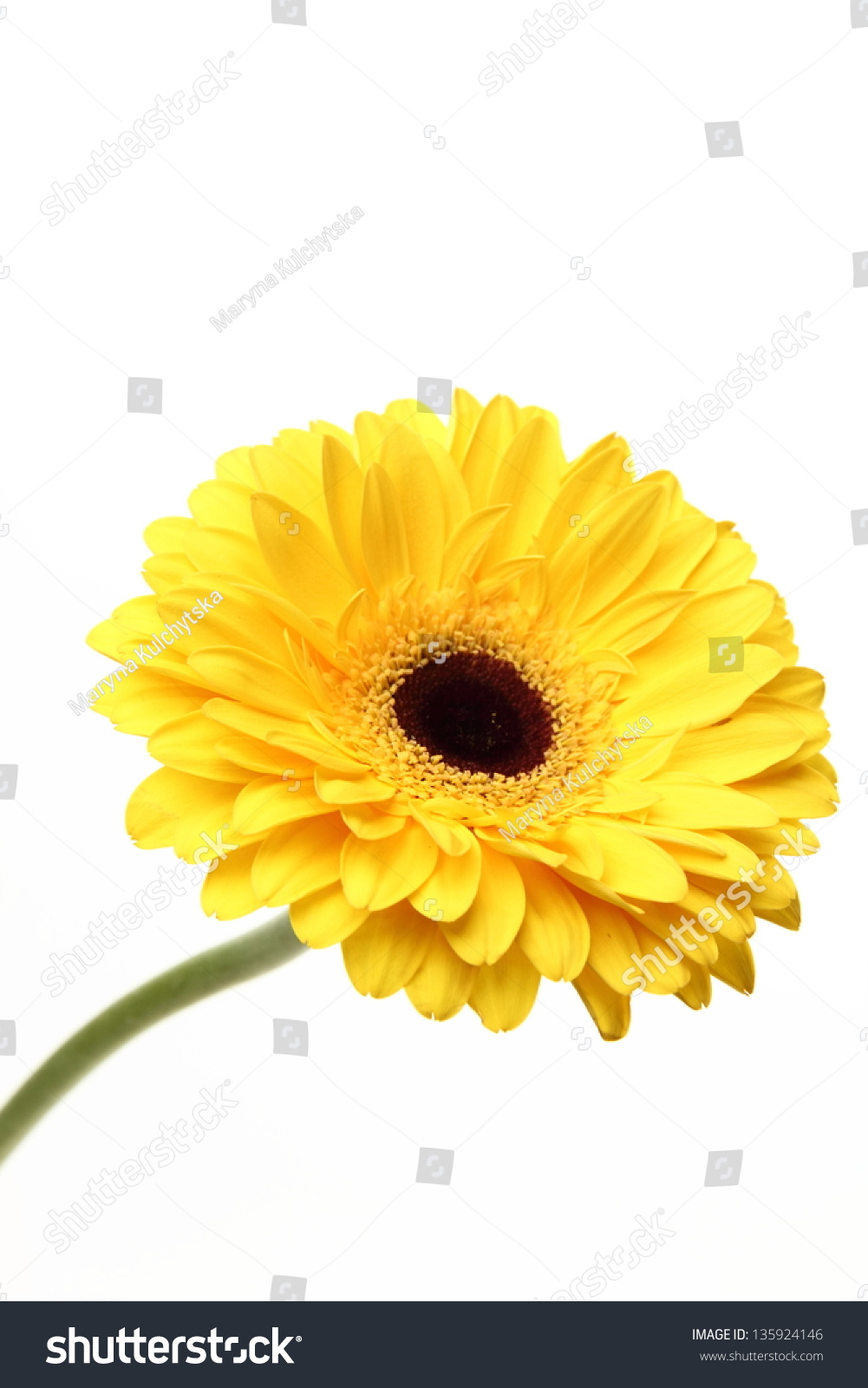 Single Flower Over White Background On Stock Photo Royalty Free
