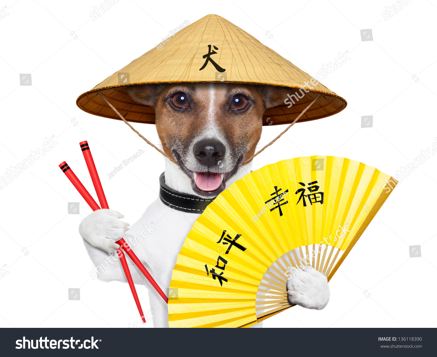 Dog With Fan : Asian dog with hand fan and chopsticks stock photo