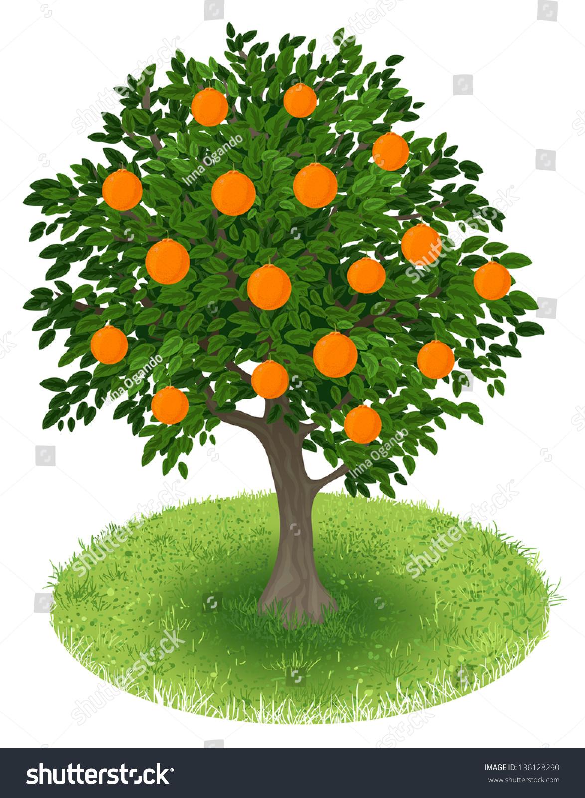 Summer orange tree with orange fruits in green field illustration