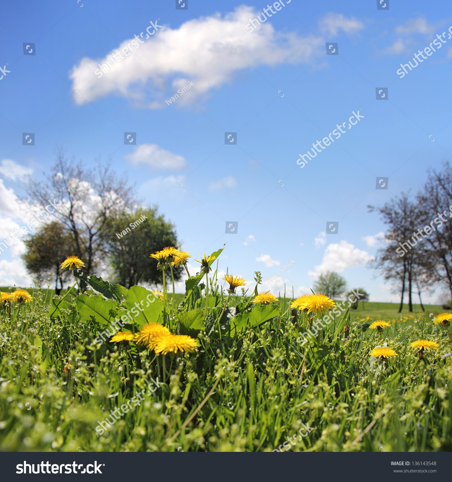 Yellow Flowers Dandelion Under Blue Cloudy Sky Stock Photo