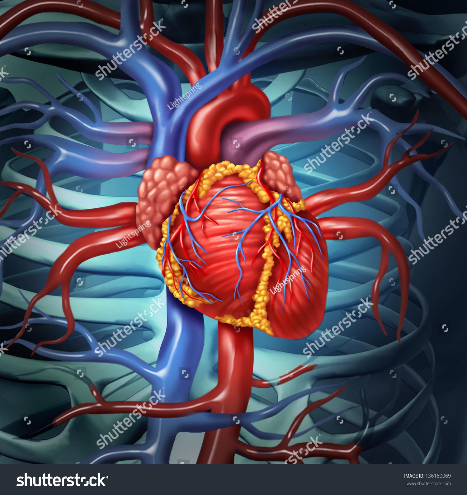 cardiovascular human heart anatomy healthy body stock illustration, Muscles