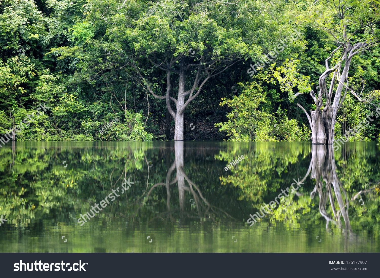 Rainforest In Amazon, Manaus, Brazil Stock Photo 136177907 ...