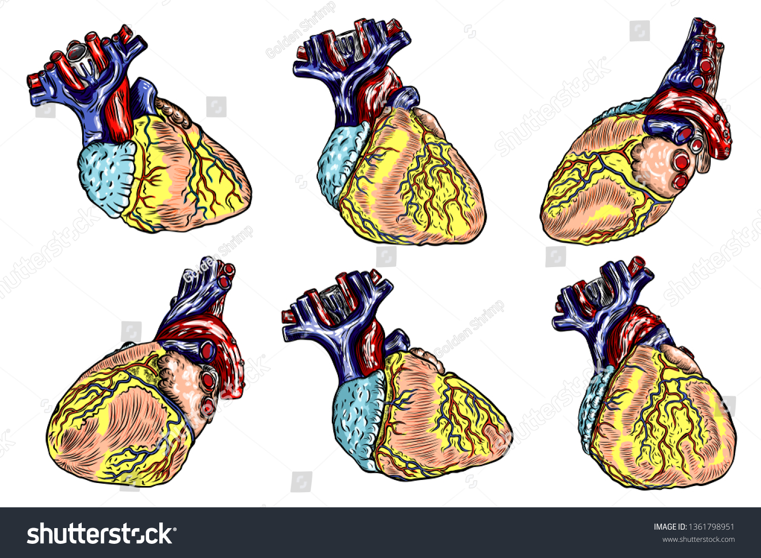 human body diagram tattoo set human anatomy heart black color stock vector  royalty free  set human anatomy heart black color