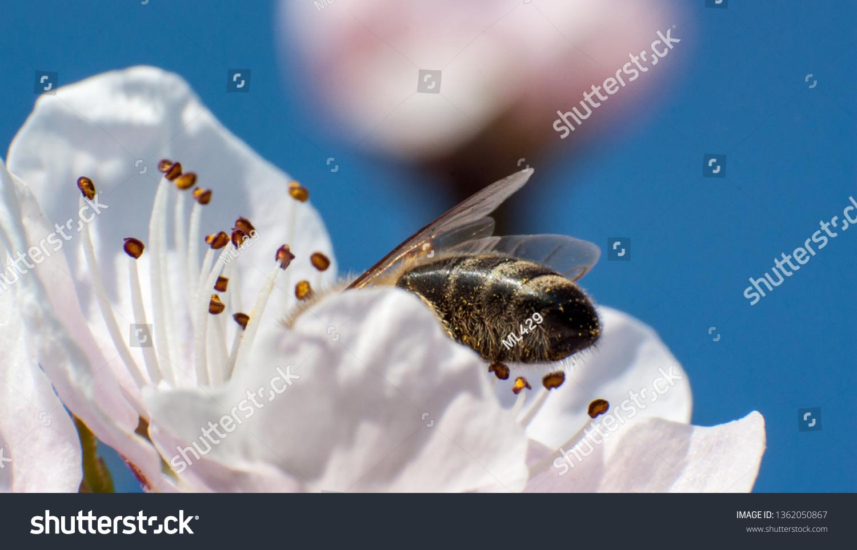Eager Honey