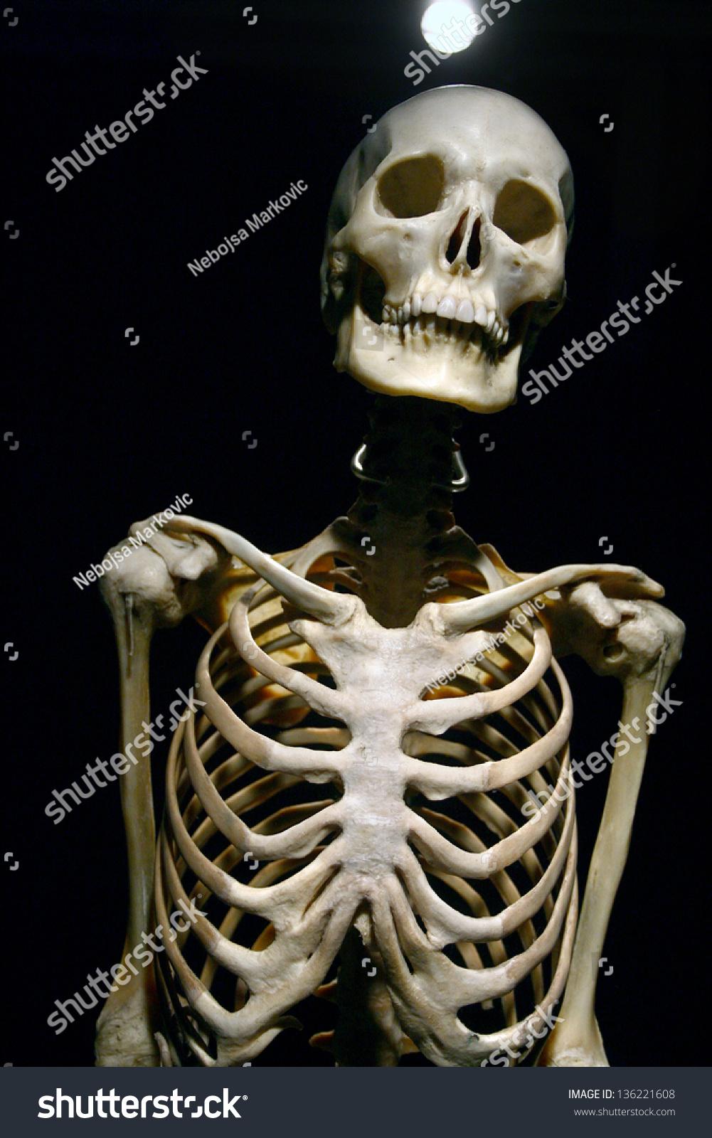 Human Anatomy Real Skeleton On Black Stockfoto Jetzt Bearbeiten