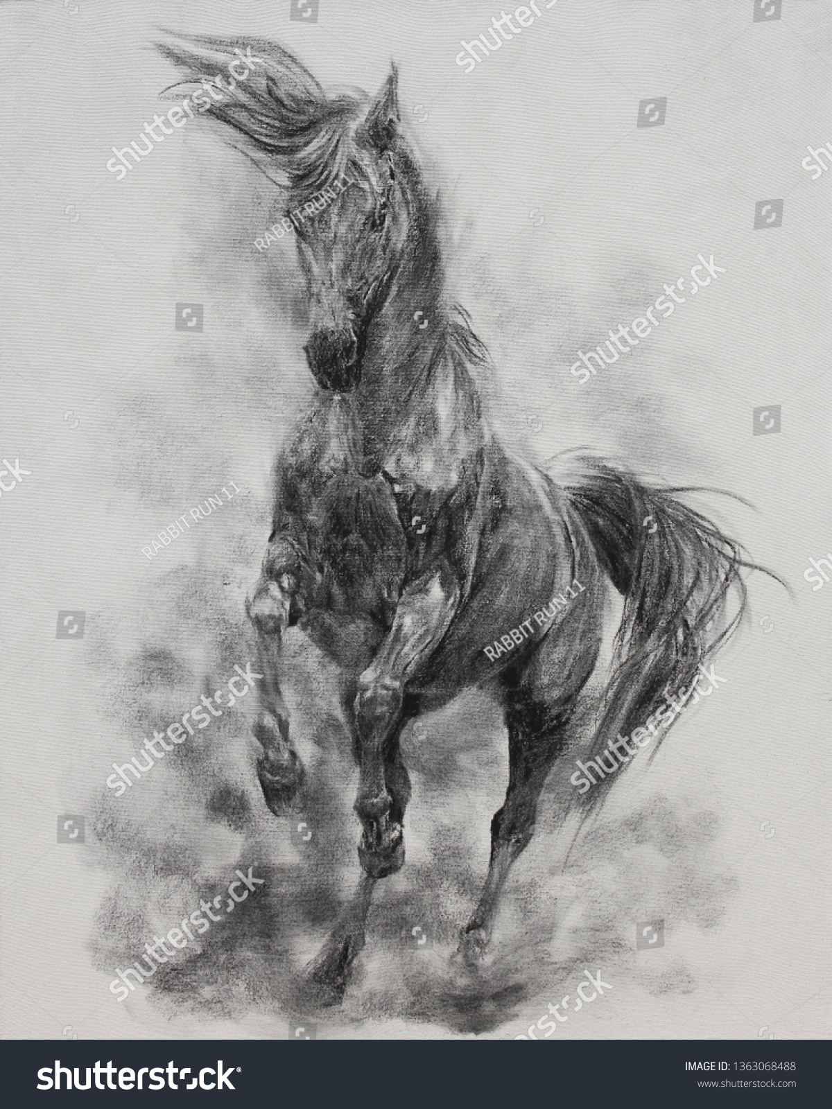 Charcoal Painting Horse On Canvas Draw Stock Illustration 1363068488