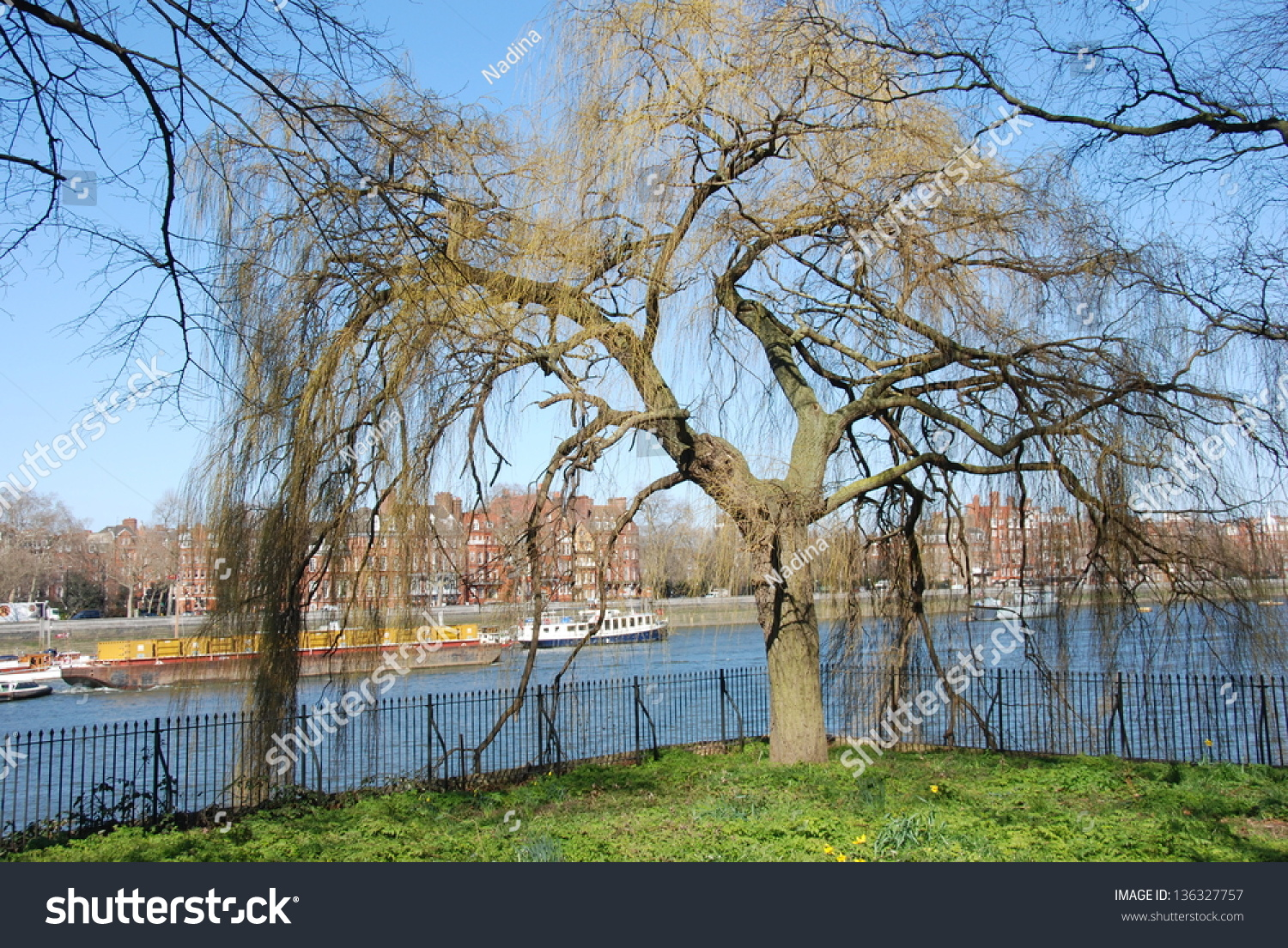 willow trees along the river thames stock photo 136327757