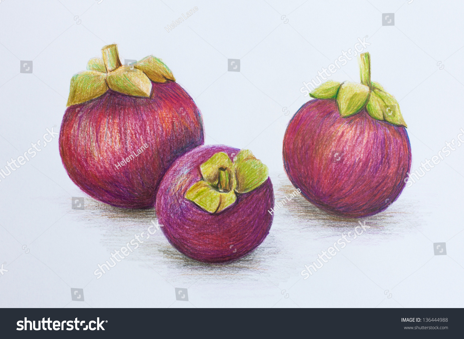 Three Mangosteen Drawing By Colored Pencils Stock Illustration