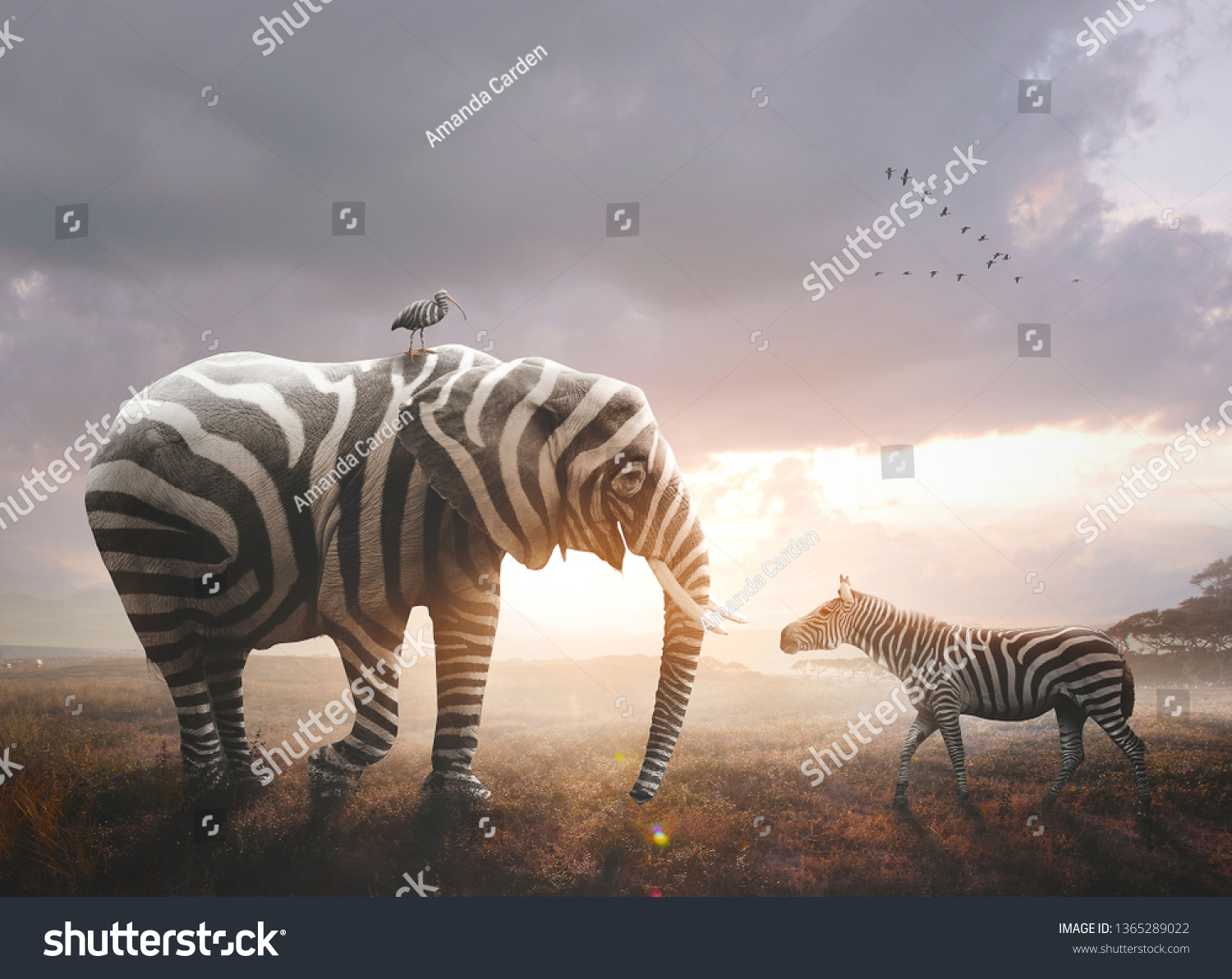 A surreal image of an African elephant wearing black and white zebra stripes #1365289022