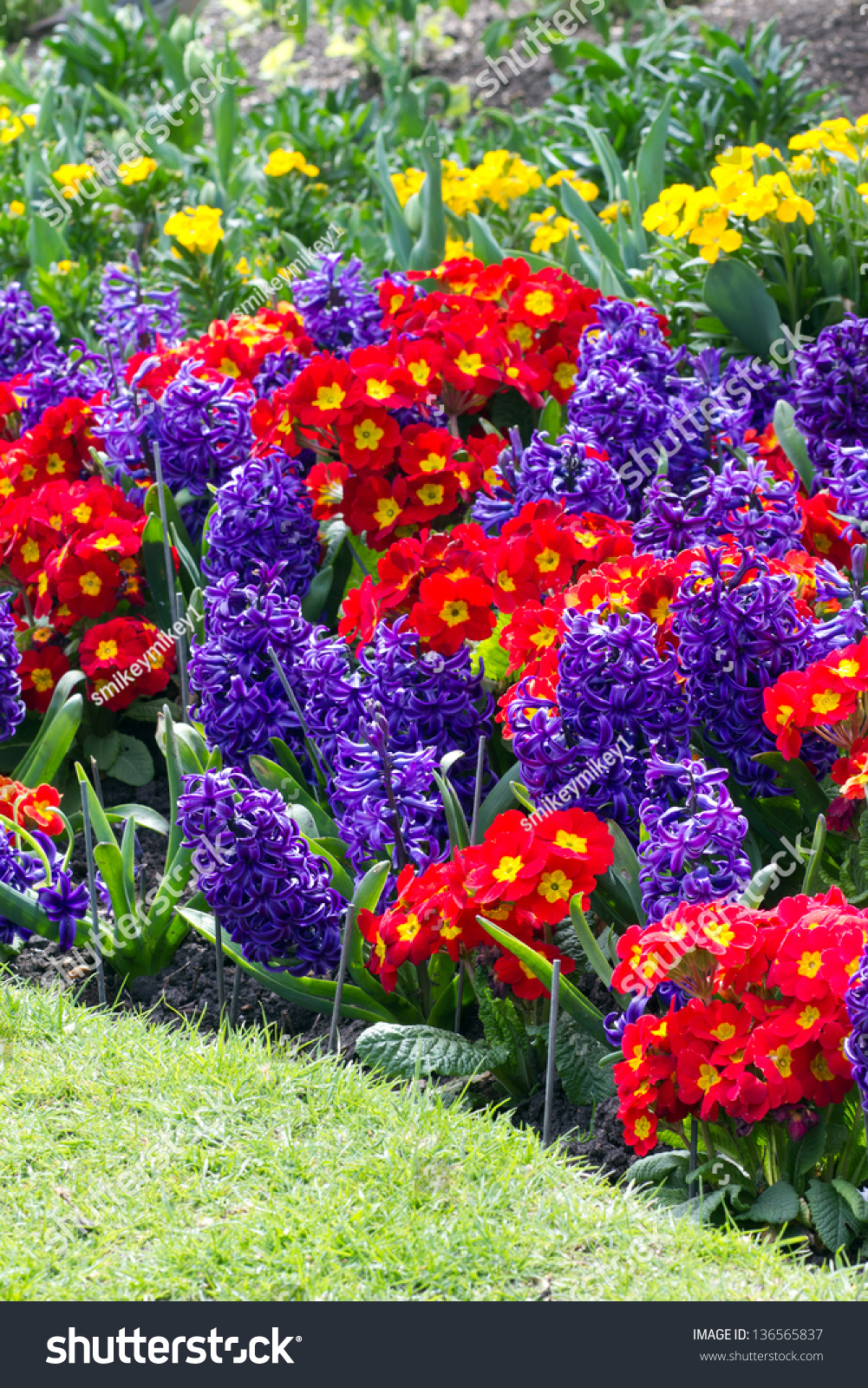 Variety Bright Spring Flowers Bloom English Stock Photo 100 Legal
