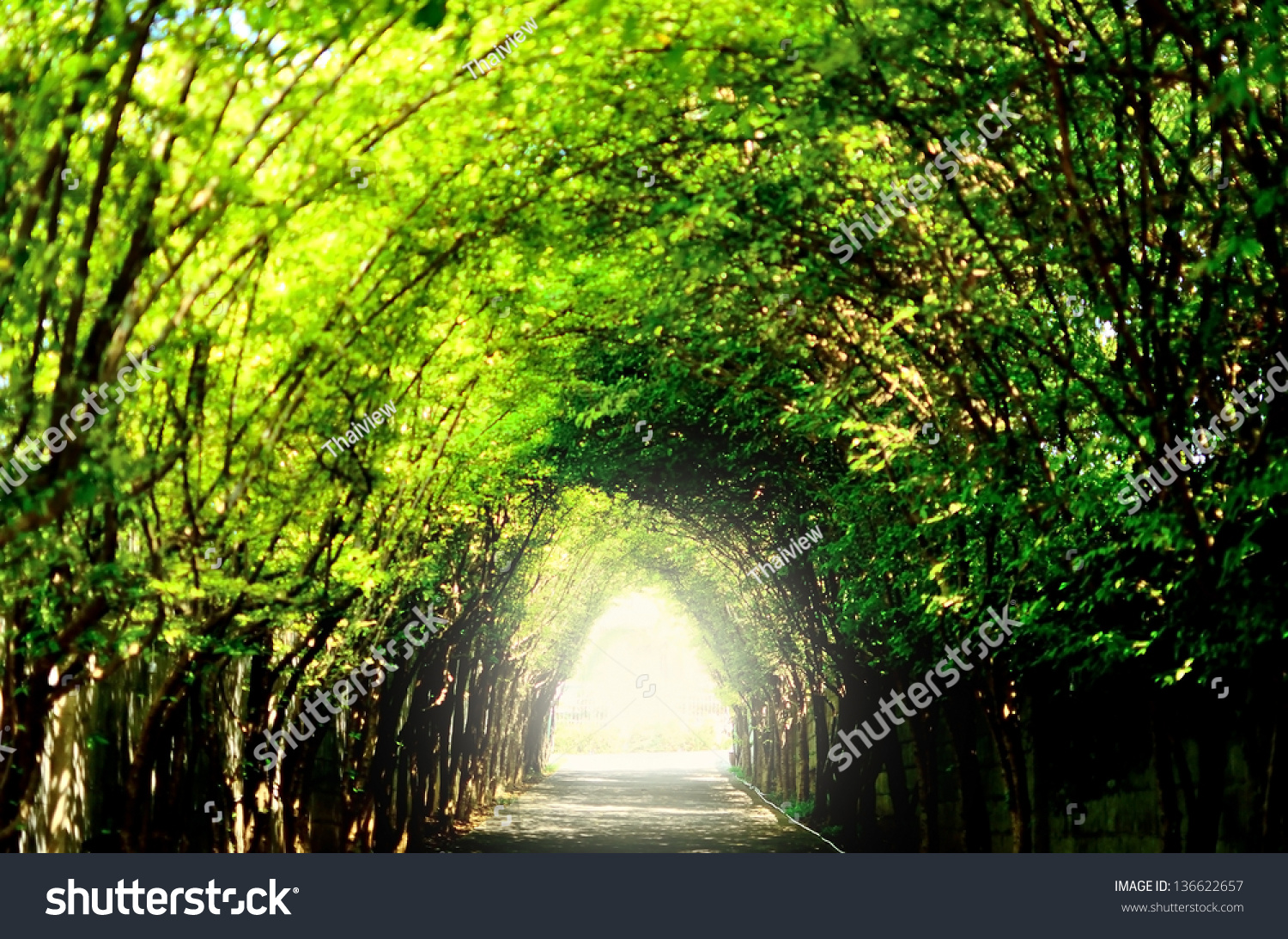 28 Green Tunnel Path Nature Forest Light At The End