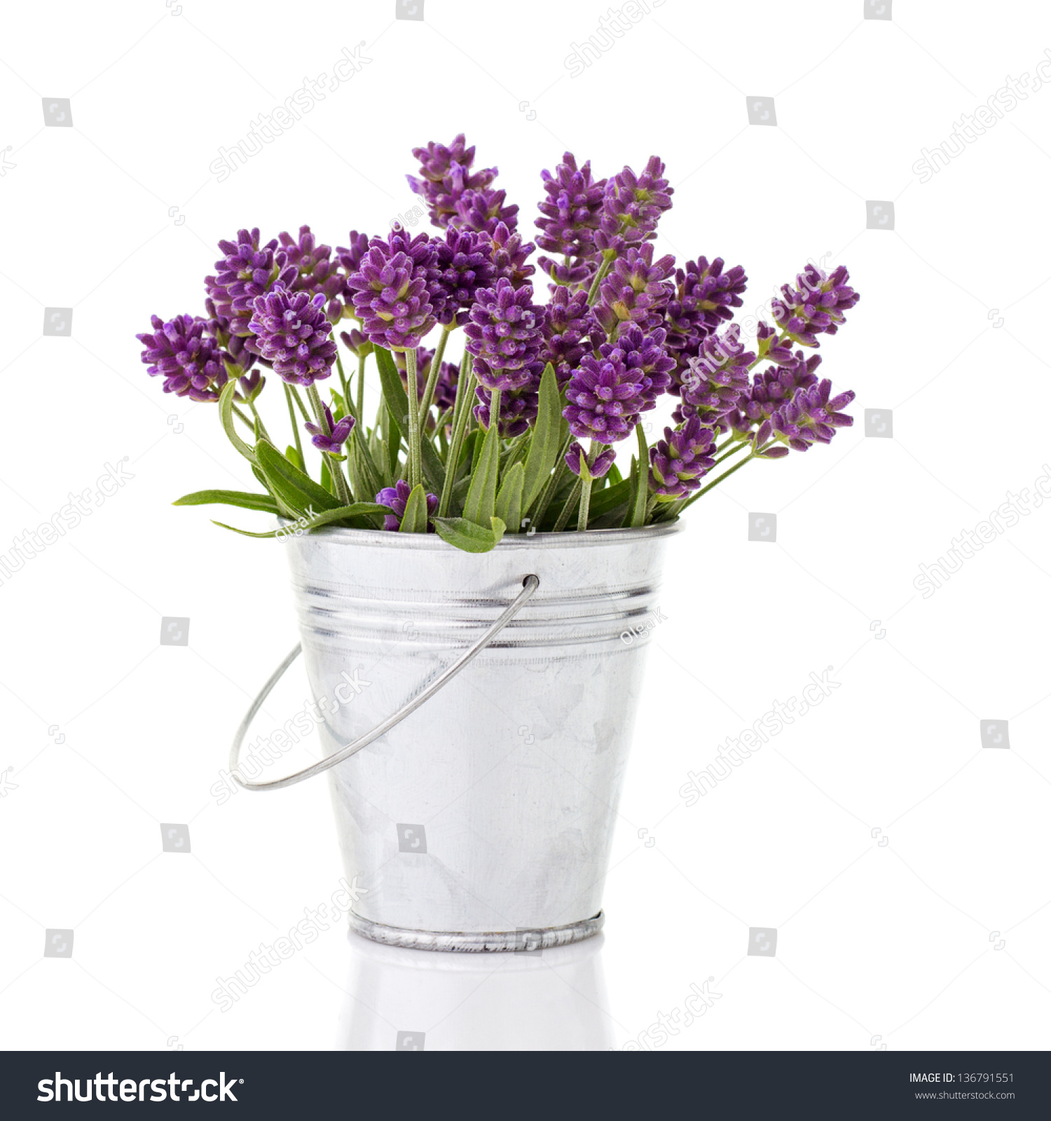 lavender in a metal bucket isolated on white stock photo