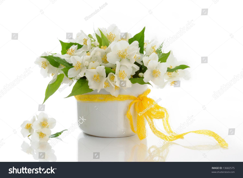 Bunch Jasmine Flowers Stock Photo Royalty Free 13682575 Shutterstock