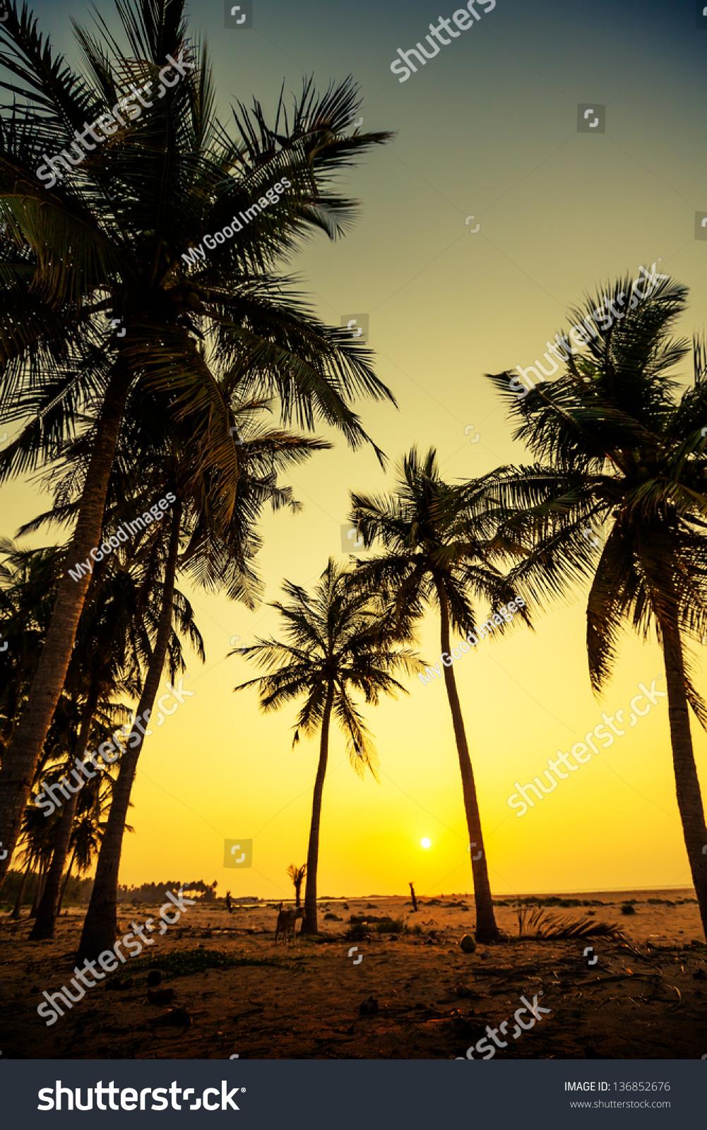 Silhouette Od Palm Trees Seashore Sri Stock Edit Now