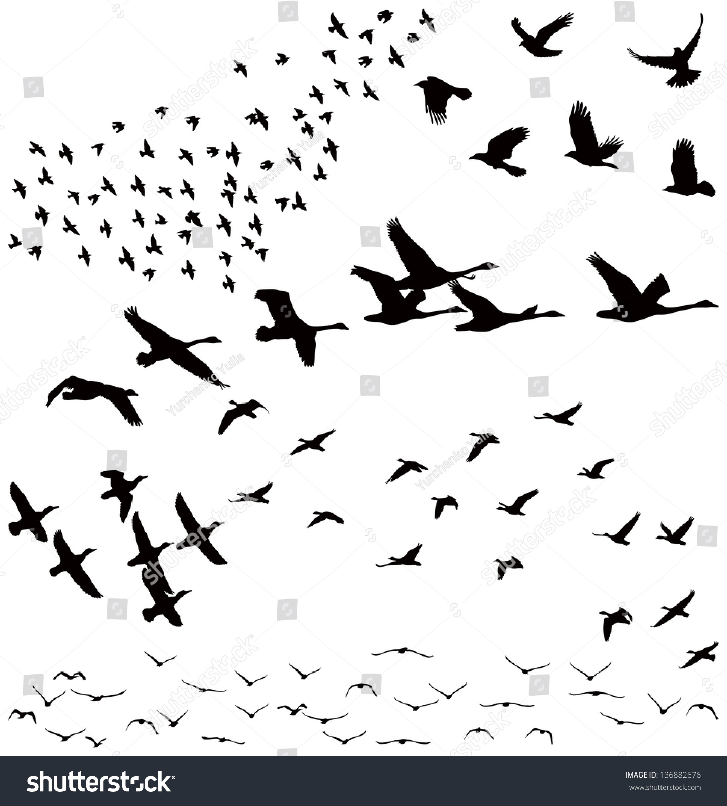 Vector Silhouettes Flock Birds Crows Swans 136882676