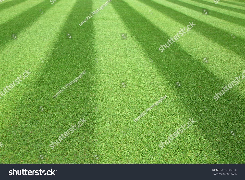 Green Golf Fairway Textured Pattern Stock Photo 137009336