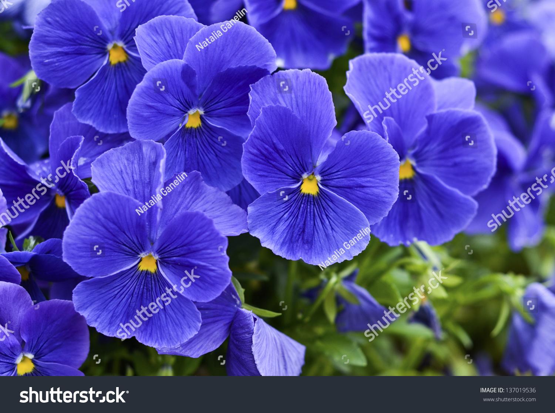Violet Blue Nude Photos 19