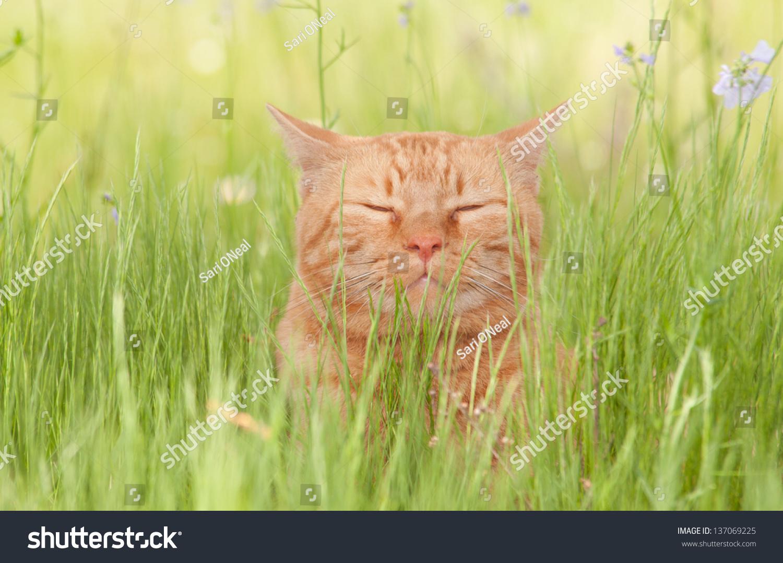 stock-photo-a-blissfully-happy-orange-ta