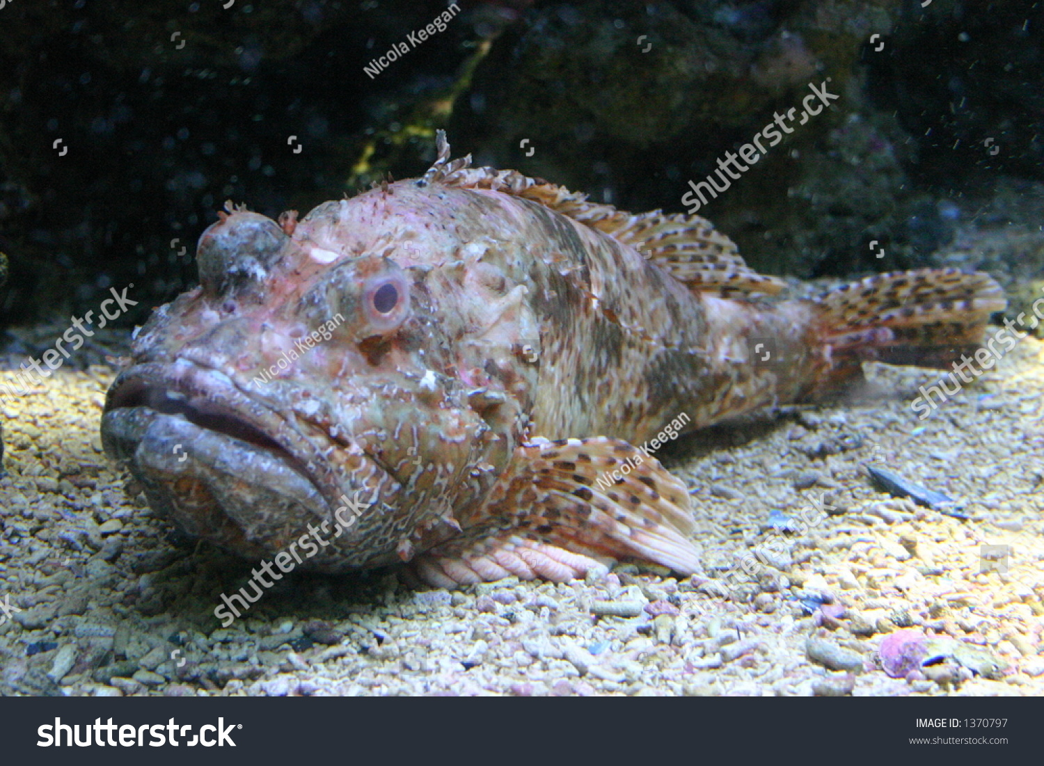 Ugly fish stock photo 1370797 shutterstock for Ugly fish pictures