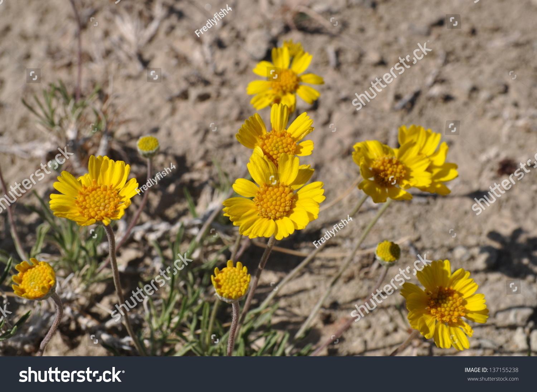 Yellow Flowers Palo Duro Canyon State Stock Photo Royalty Free