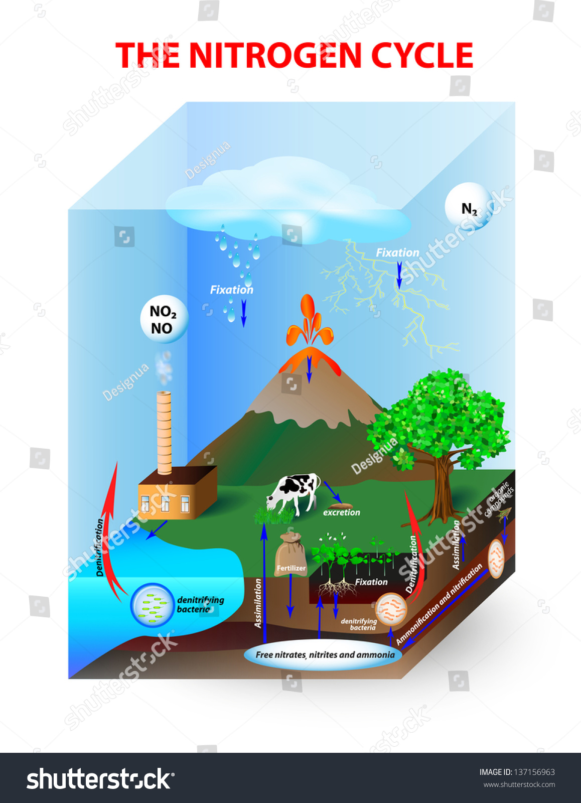 Diagram nitrogen cycle process by which stock vector 137156963 diagram nitrogen cycle process by which nitrogen is converted between its various chemical forms pooptronica Choice Image