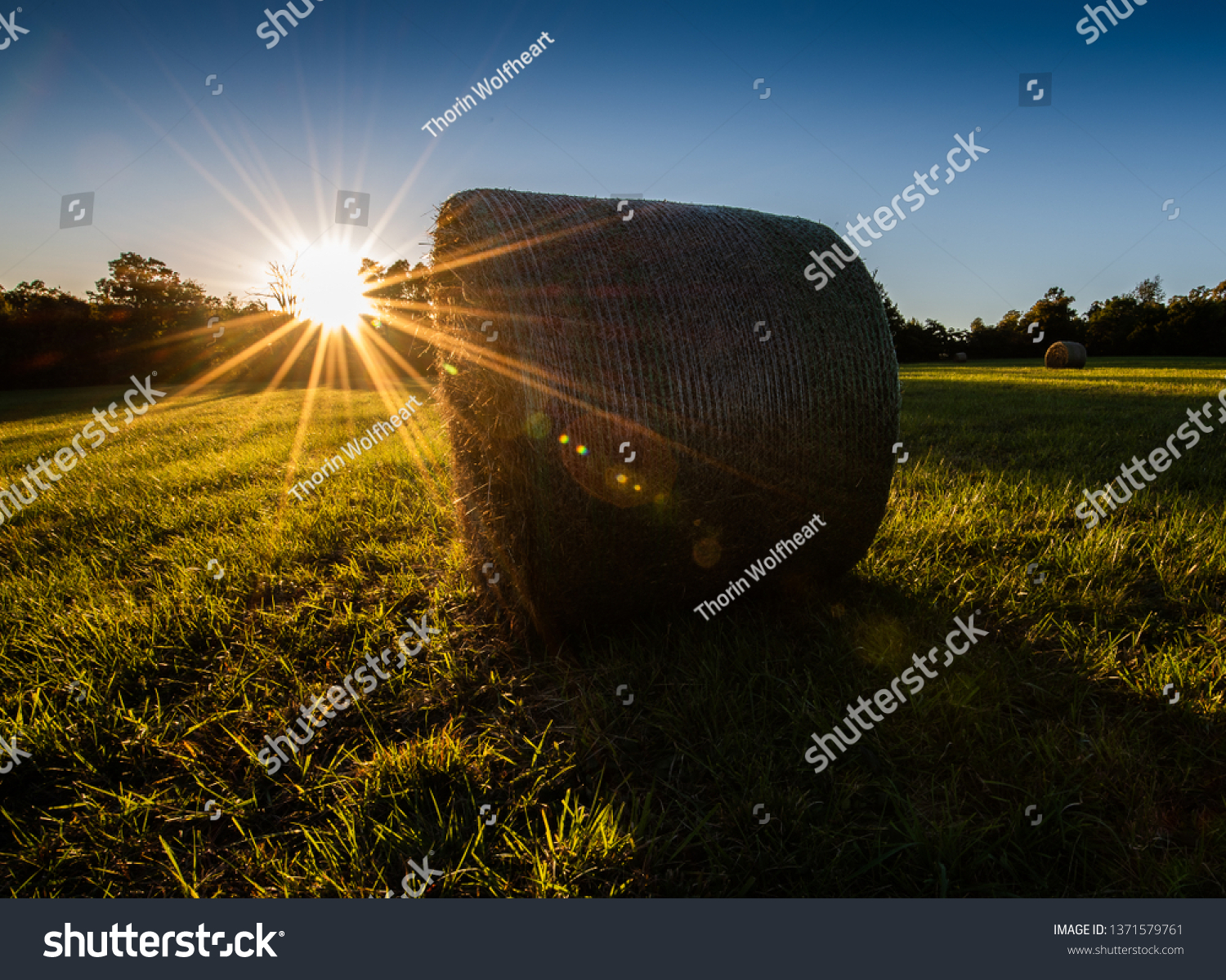 Arkansas countryside of a green field of hay bales in the rural area of the South. The farmlands of the south are exemplified in this sunset image.  #1371579761