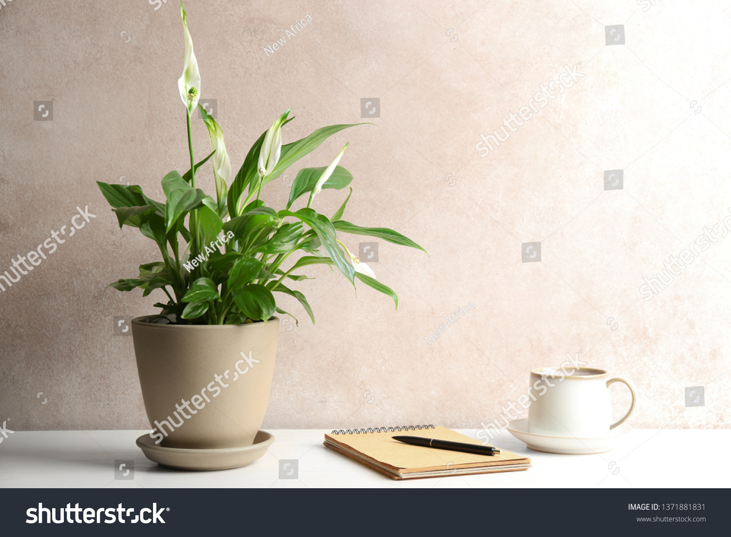Composition with peace lily, notebook and cup on table against color wall. Space for text #1371881831