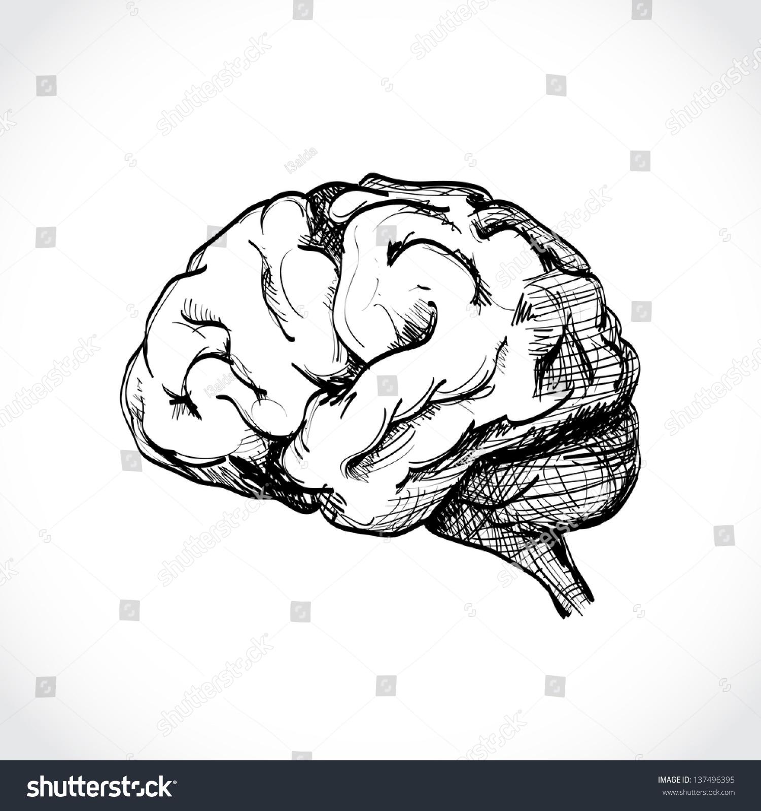 Isolated Human Brain Sketch Illustration Stock Vector 137496395 - Shutterstock
