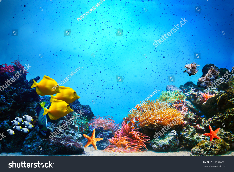 underwater scene coral reef colorful fish stock photo 137510531
