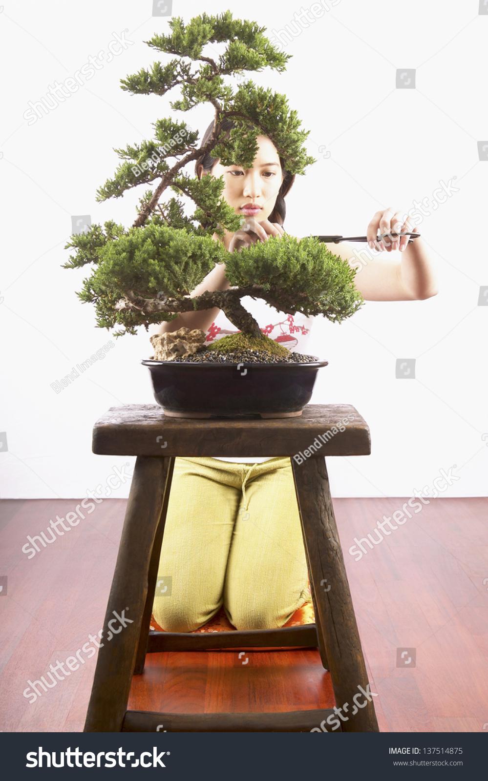 Как вырастить бонсай в домашних условиях фото пошагово