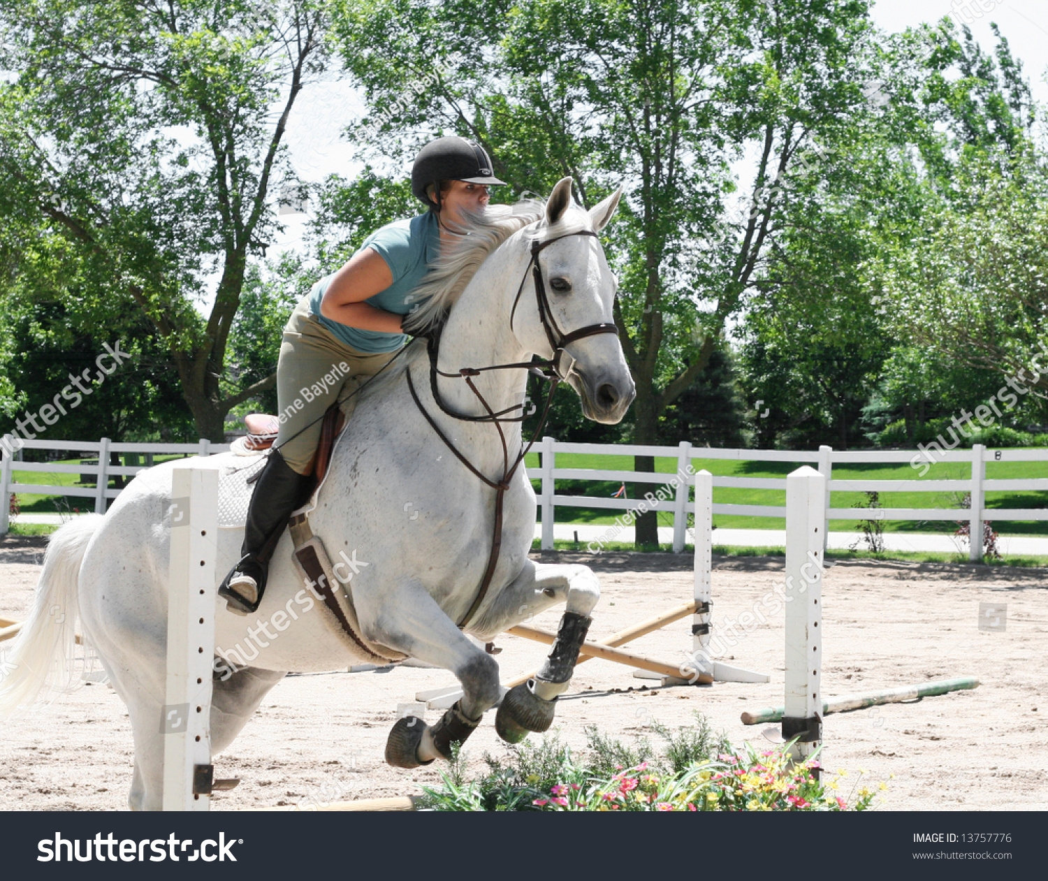 Beautiful White Horse Jumping Hurdles Stock Photo 13757776 ...