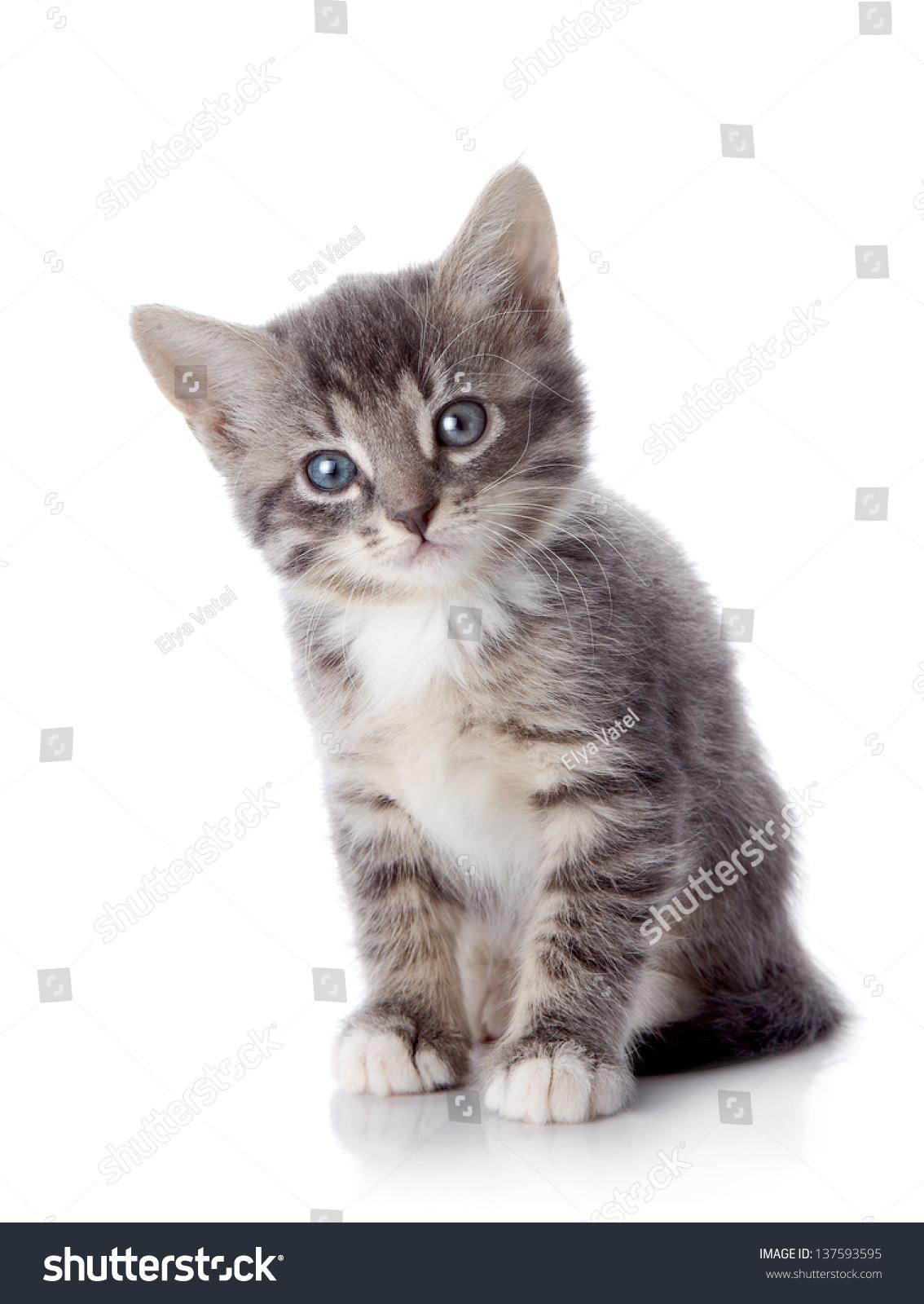 Gray Striped Kitten Striped Kitten Blue Stock