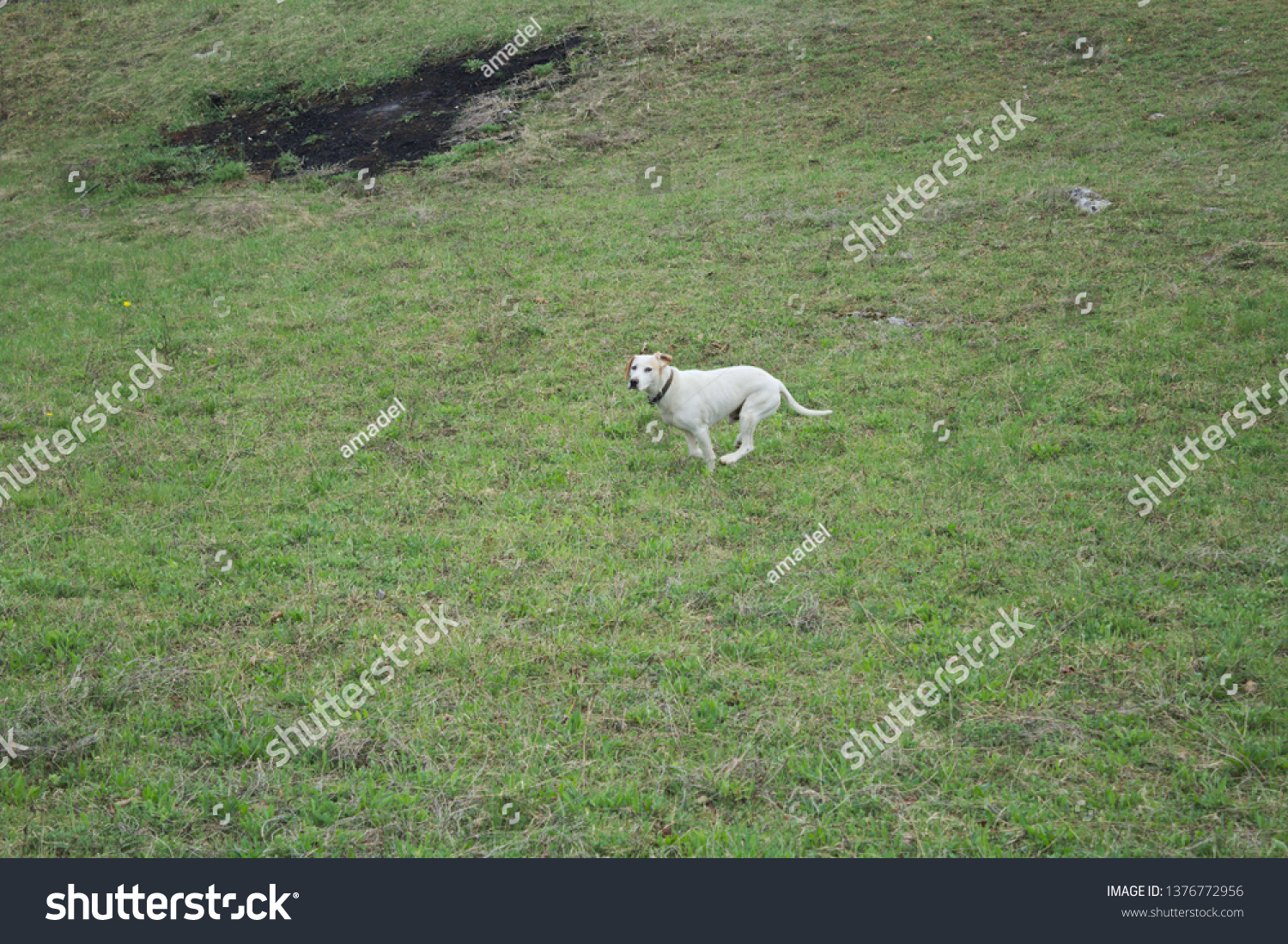 stock-photo-young-dog-running-over-meado