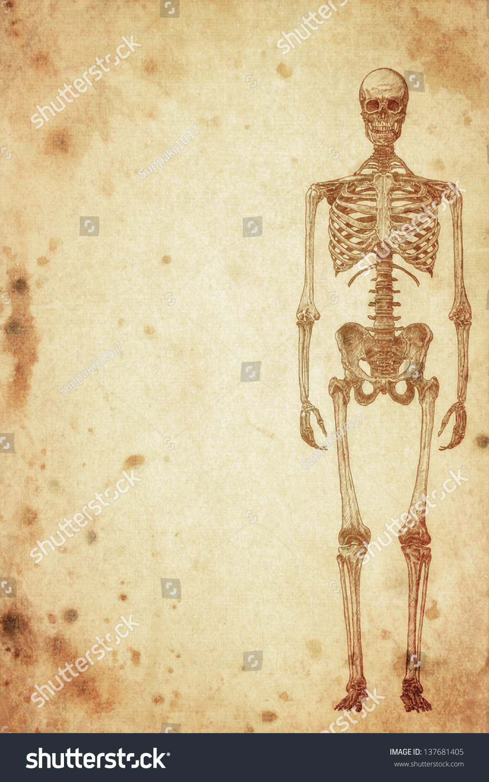human skeleton essay The human skeleton consists of 206 bones we are actually born with more bones (about 300), but many fuse together as a child grows up these bones support your body and allow you to move bones contain a lot of calcium (an element found in milk, broccoli, and other foods) bones manufacture blood .