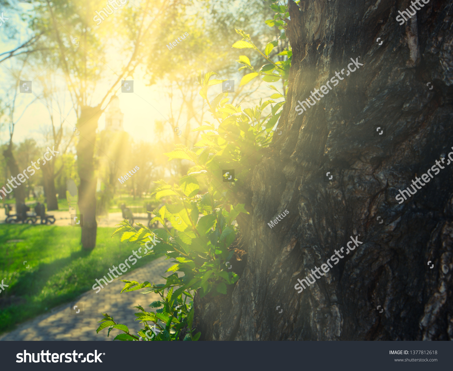 Sun shining over tree trunk in park with view at grass, copy-space