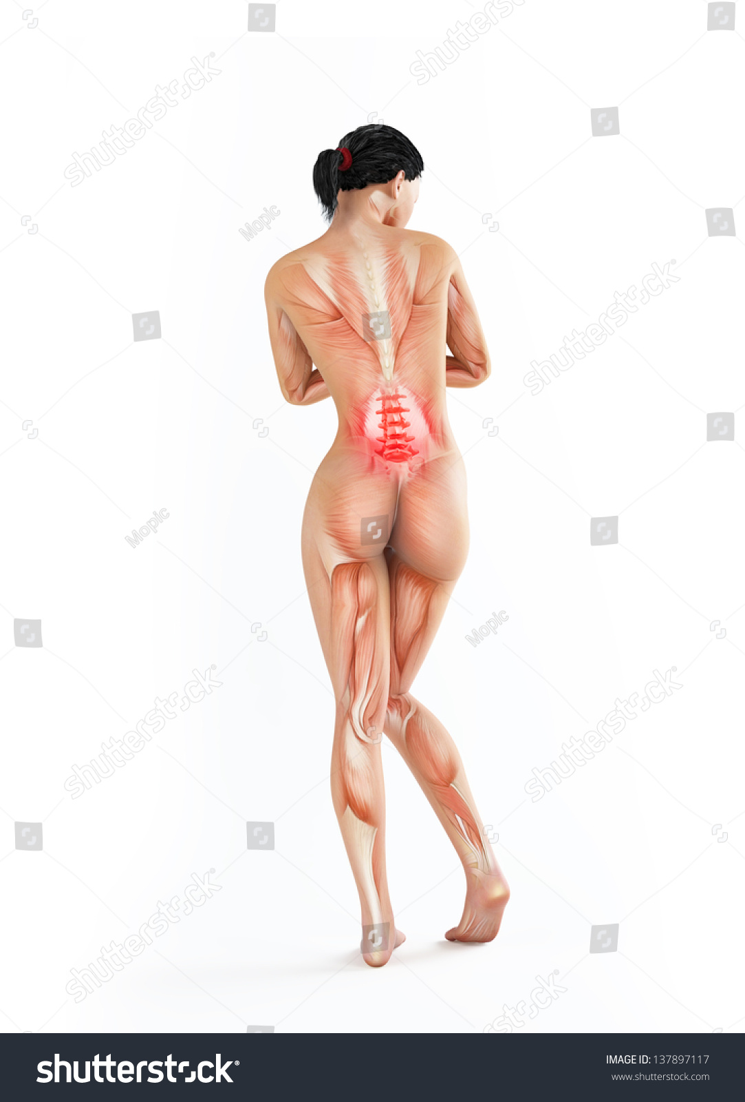 Female Anatomy Illustration Lower Back Ache Stock Illustration ...