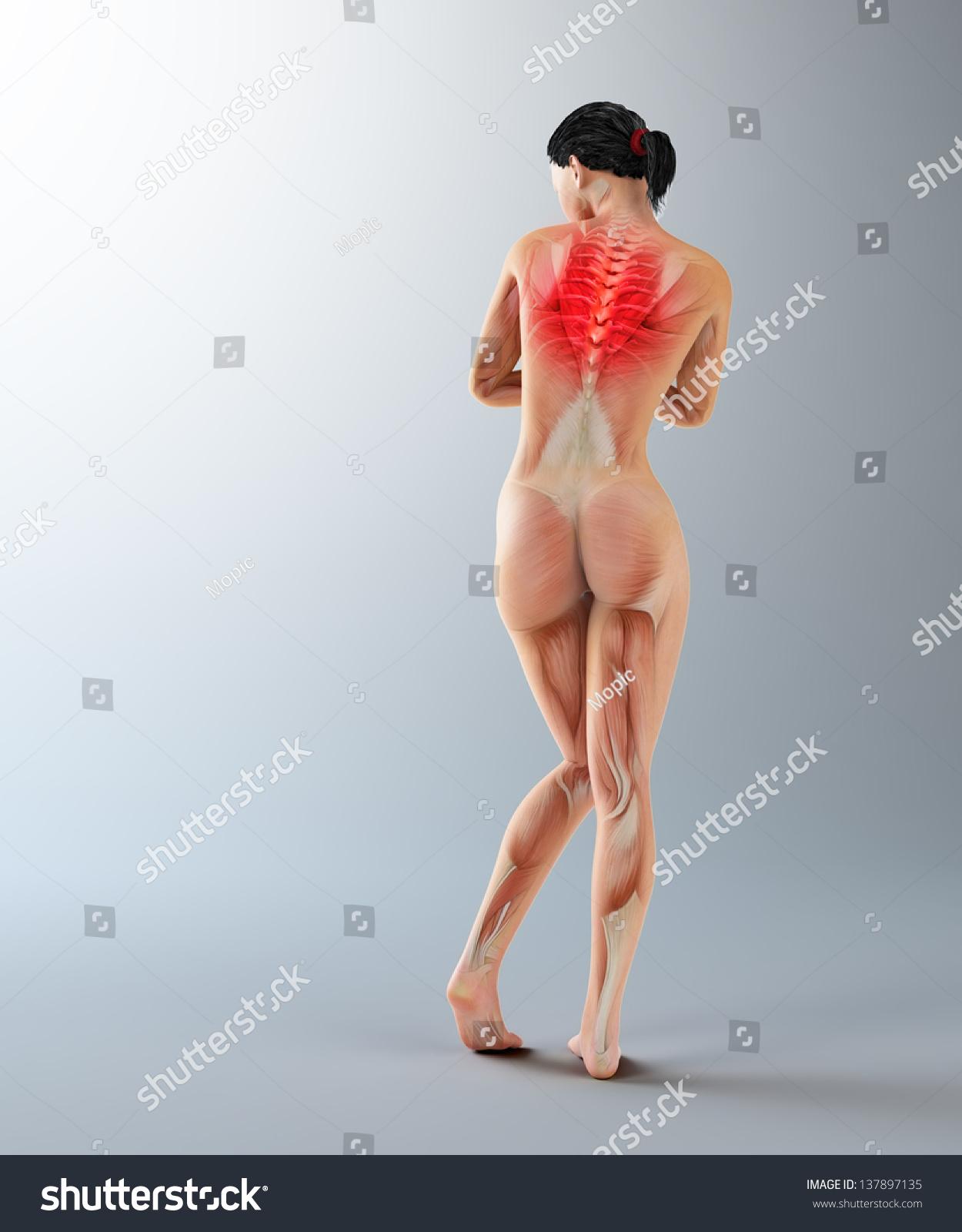Female Anatomy Illustration Upper Back Ache Stock Illustration ...