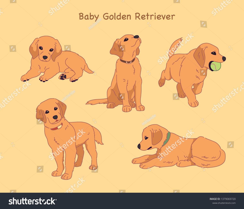 Various Poses Cute Golden Retriever Puppies Stock Vector Royalty Free 1379069720