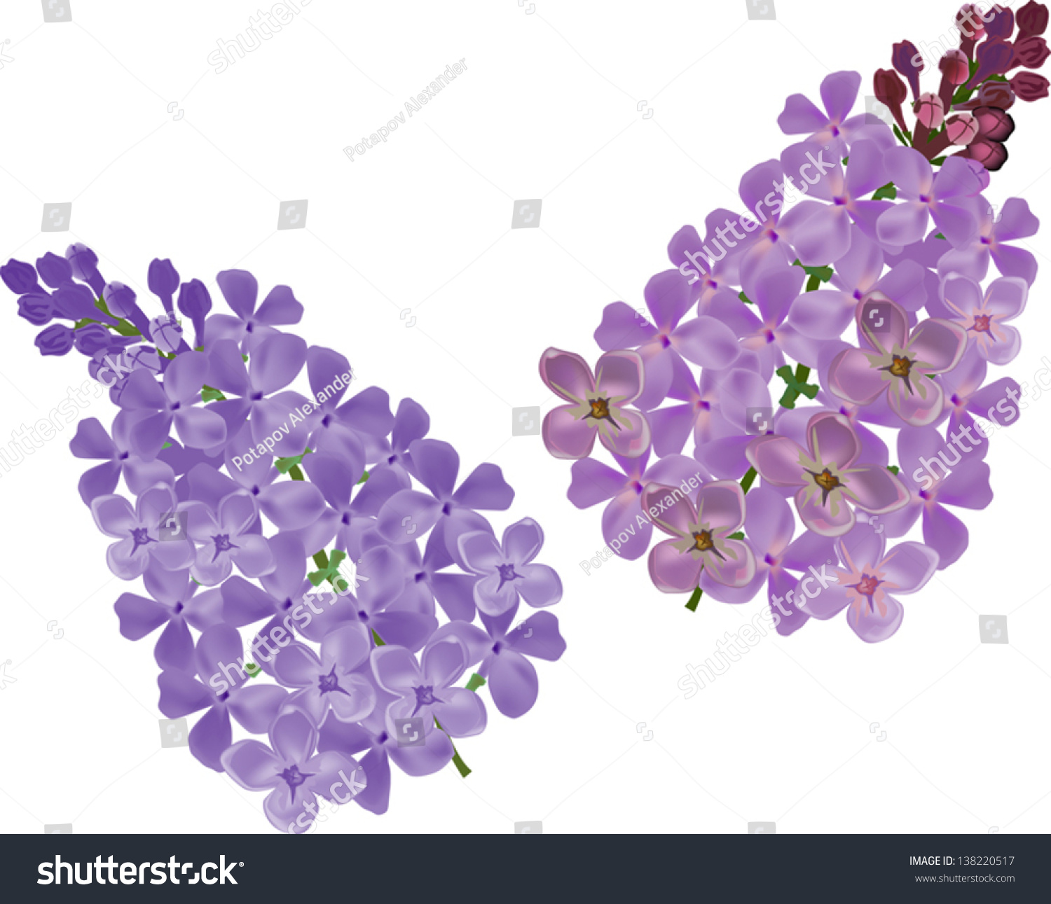Illustration With Lilac Flower Branches On White