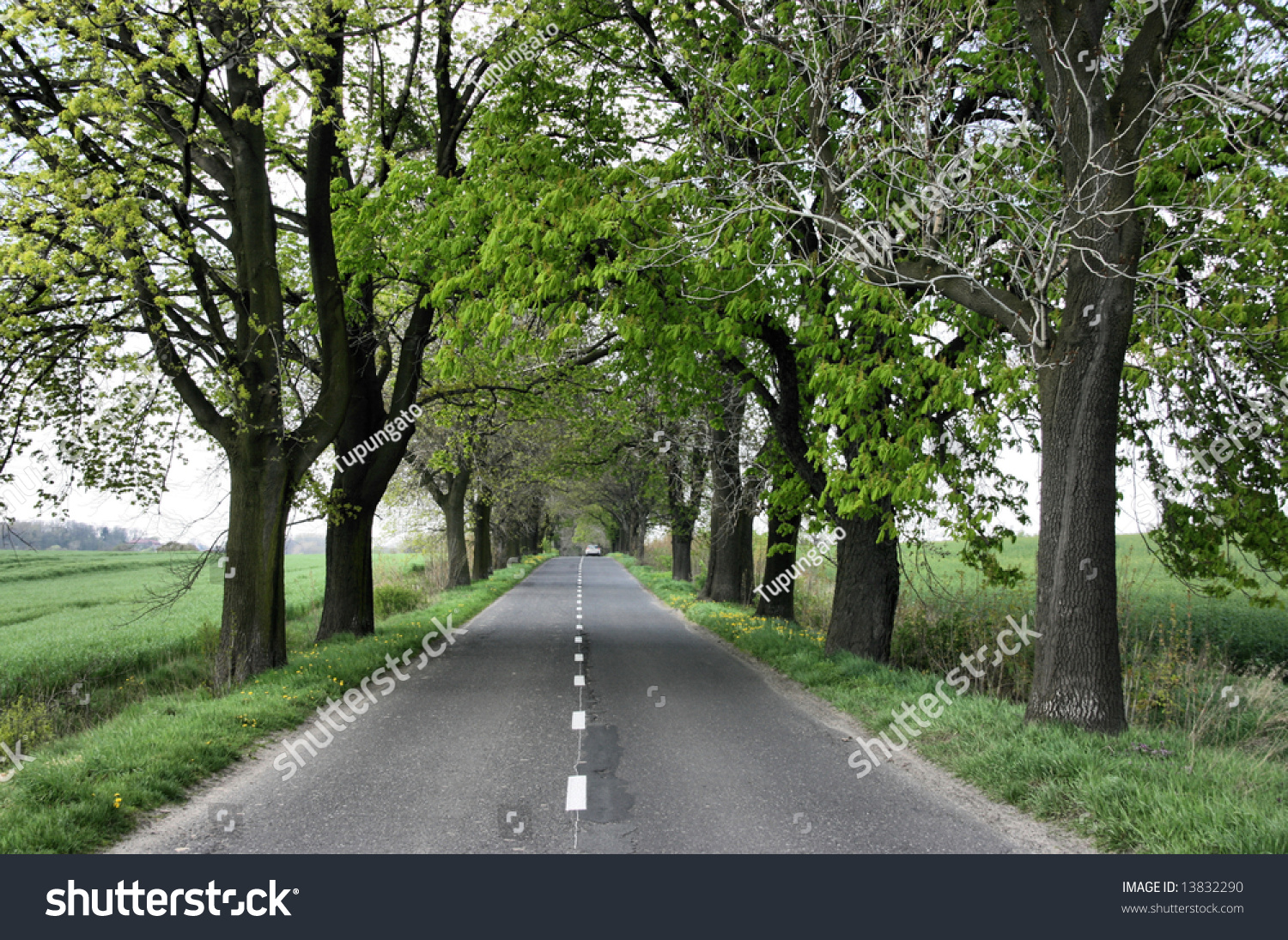 Straight Road Under Trees Polish Countryside Stock Photo 13832290 ... for Straight Road With Trees  104xkb