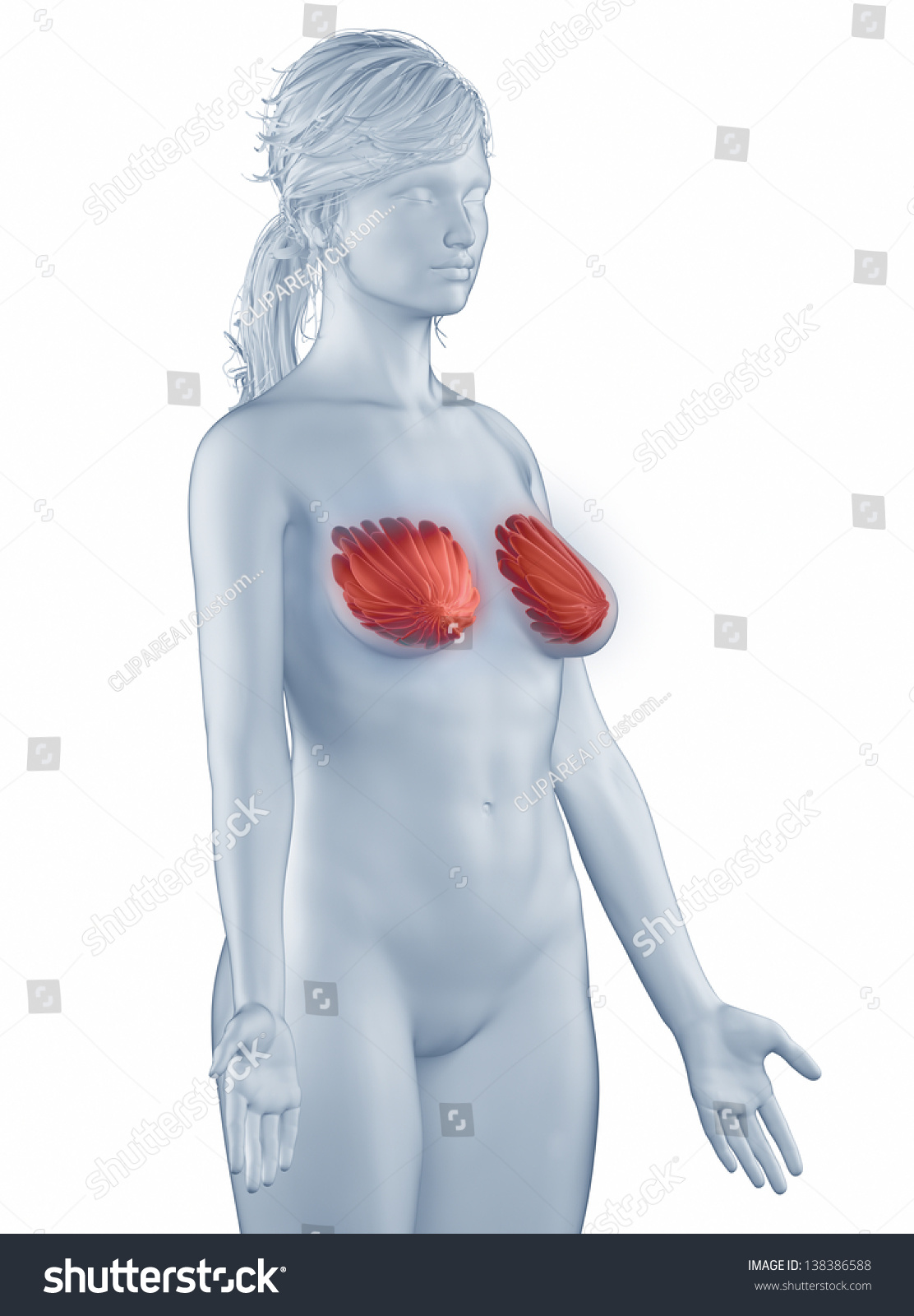 Breast Position Anatomy Woman Isolated Lateral Stock Illustration